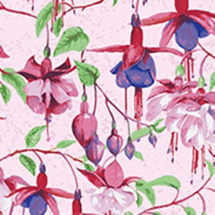 Fuchsias, light pink