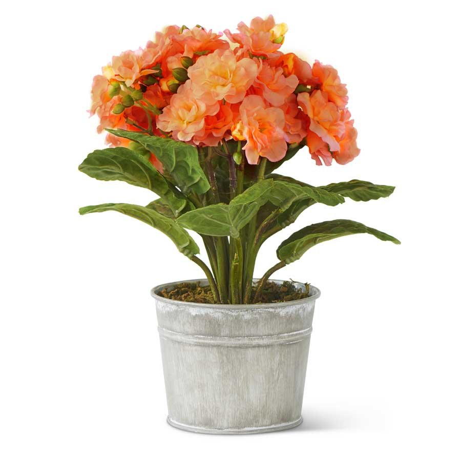 10 Inch Orange African Violet in Tin Pot