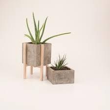 Succulent Plant with Concrete Planter