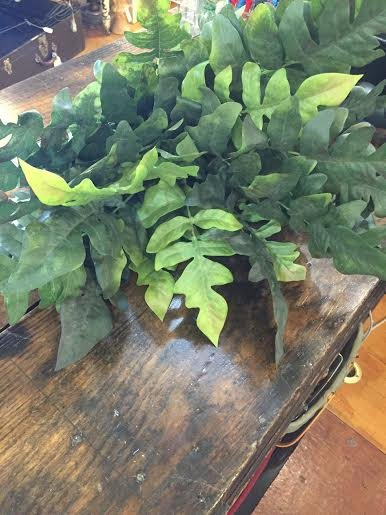 22 Finger Fern Bush x25