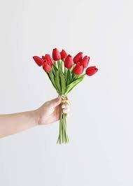 Fuchsia Mini Tulip 10.5in