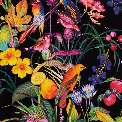 Rainbow Rainforest - Black