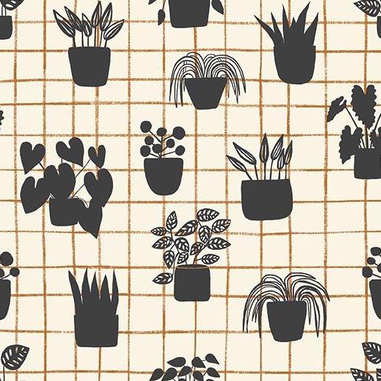 Home - House Plants - Shale