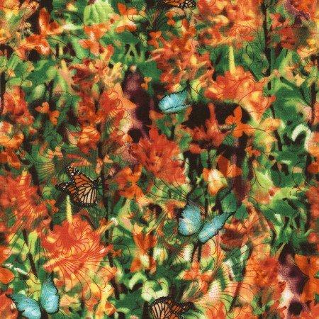 Indian Paintbrush - Garden C4055
