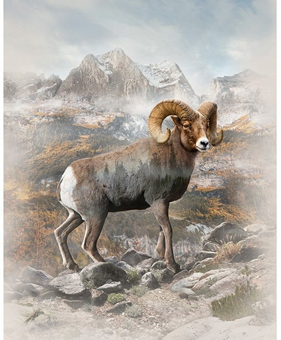 Hoffman Spectrum Digital Panel #266 Bighorn Sheep Q4536 20  Natural