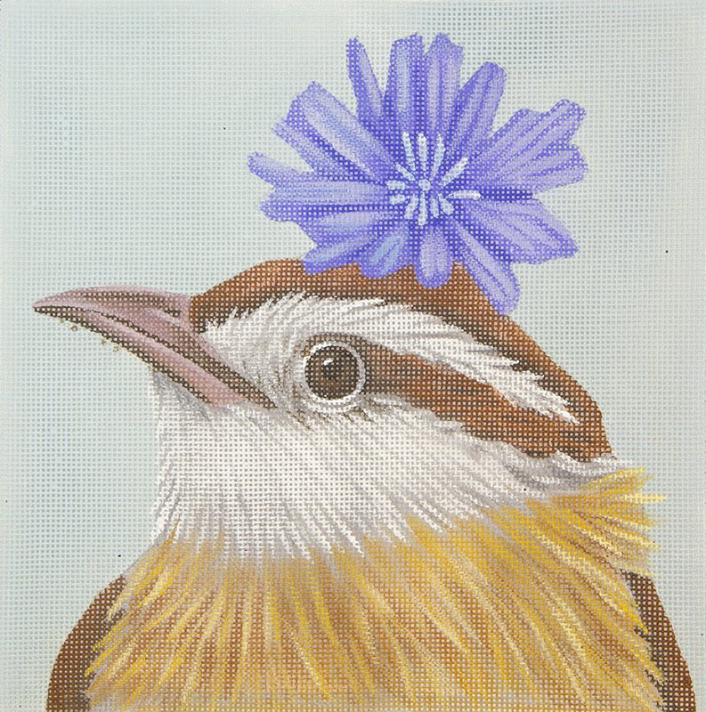 VS201C Carolina Wren