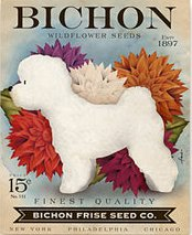 Seed Co Bichon