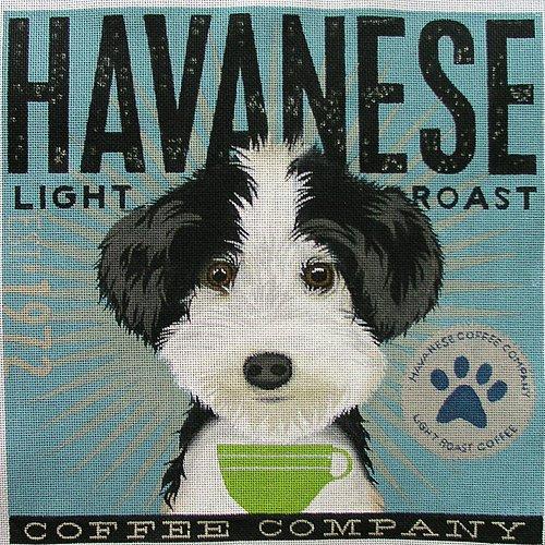 Coffee Co Havanese