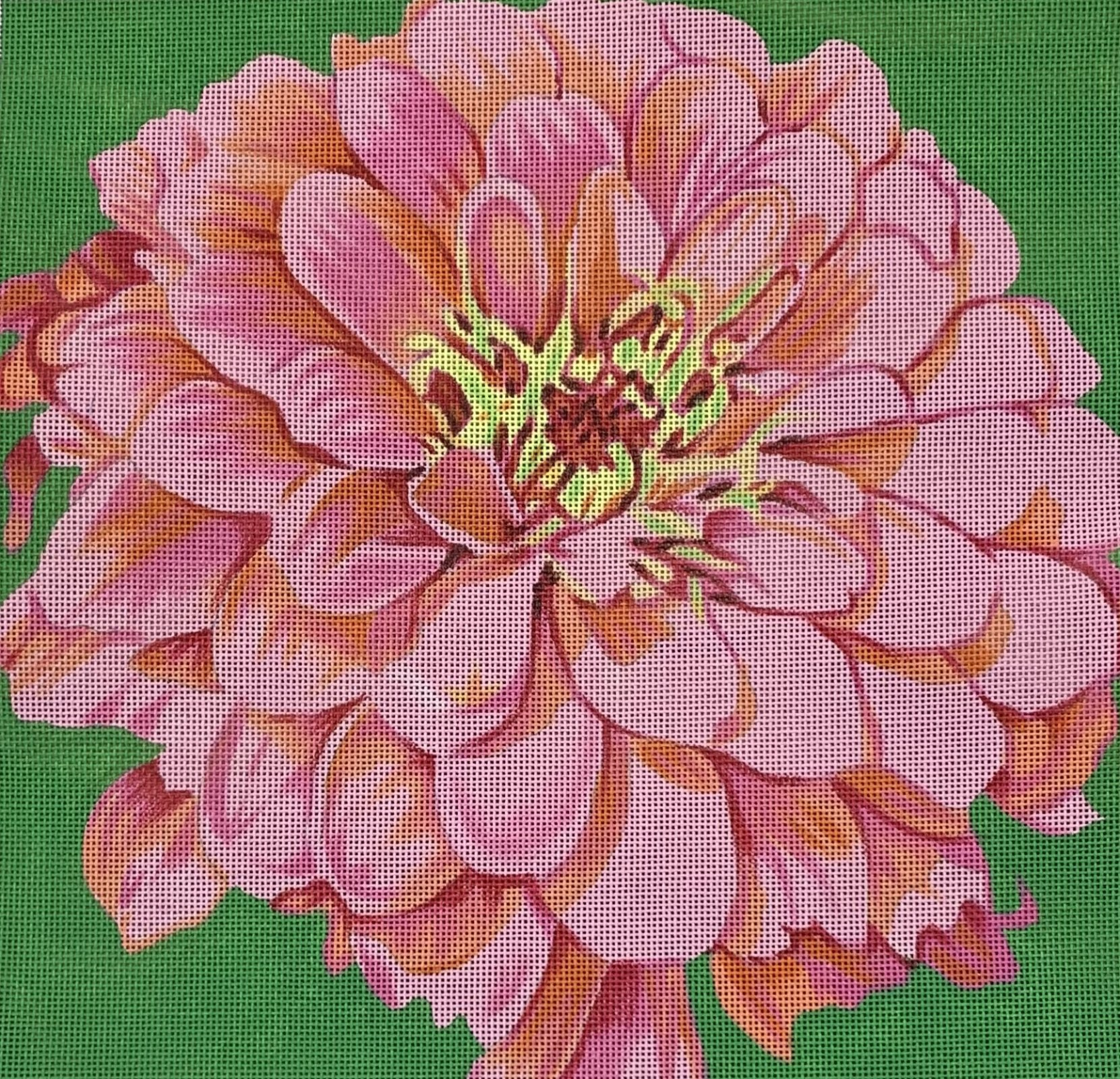 Cosmopolitan Zinnia/Green Background