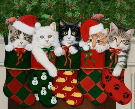 Christmas Stocking Christmas Kitties 36in Panel Digital (pre-order) June