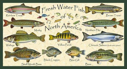 Keep It Reel-Scenic Fish Panel