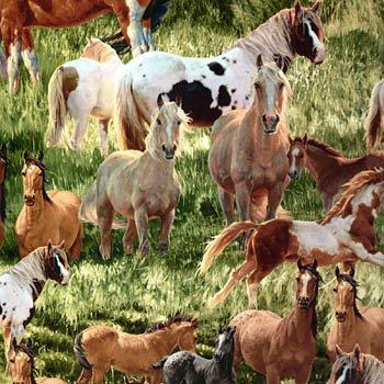 Mustang Meadows mustangs in field