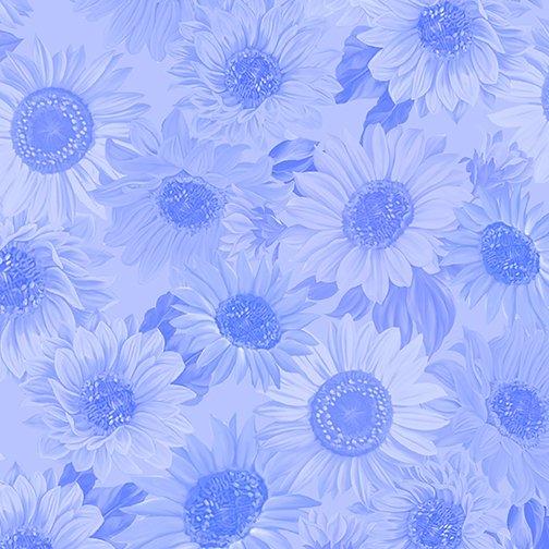 108 Sunflower Whisper Cornflower Blue Wide Backing