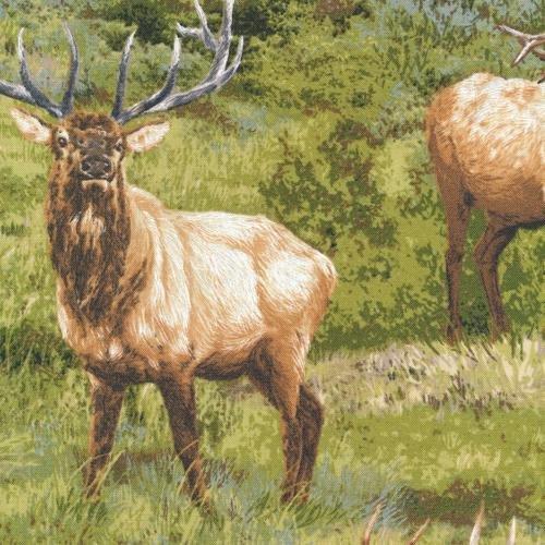 Born Free - Elk