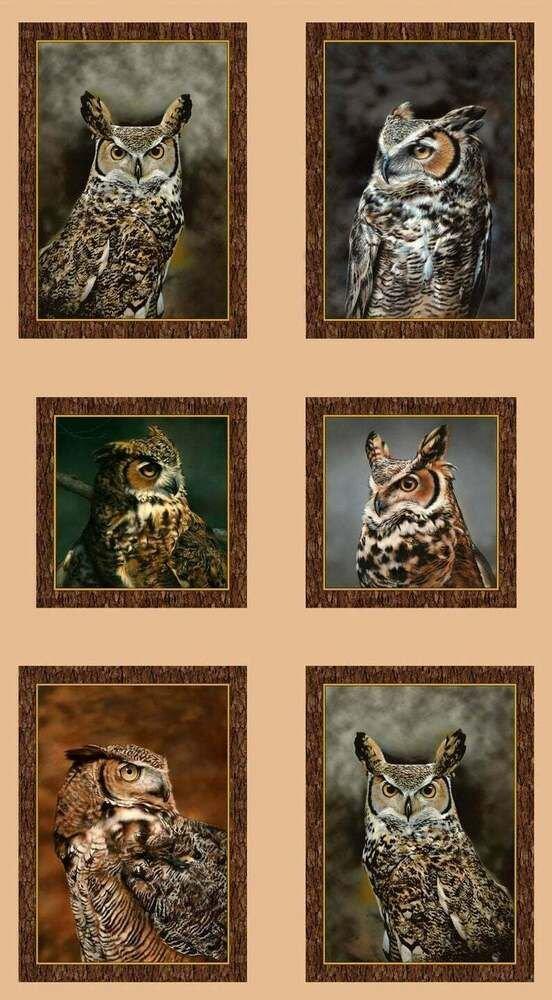 Nocturnal Wonders - 24 Panel