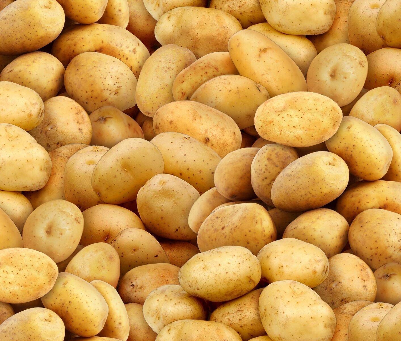 Food Festival - Potatoes
