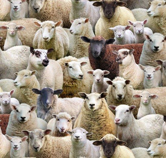 Farm Animals - Packed Sheep (Multi)