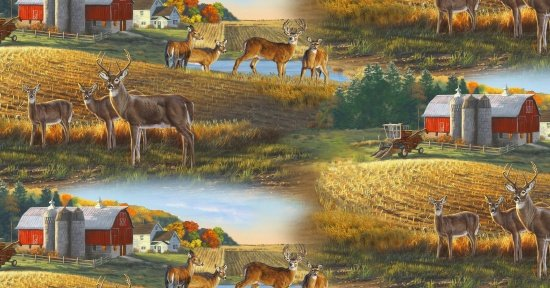 Whitetails - Deer on a Farm