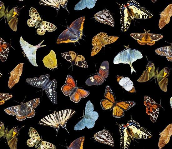Butterflies and Moths (Black)