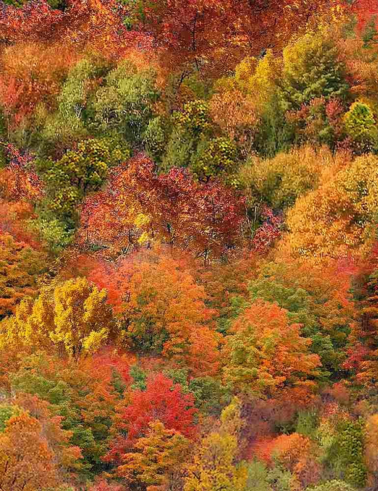 Fall Trees Packed (Multi)