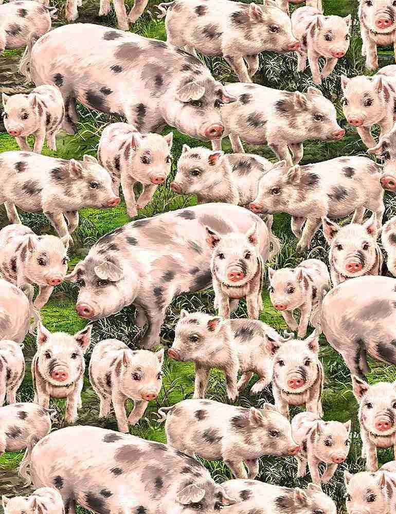 *Packed Pigs (Multi)