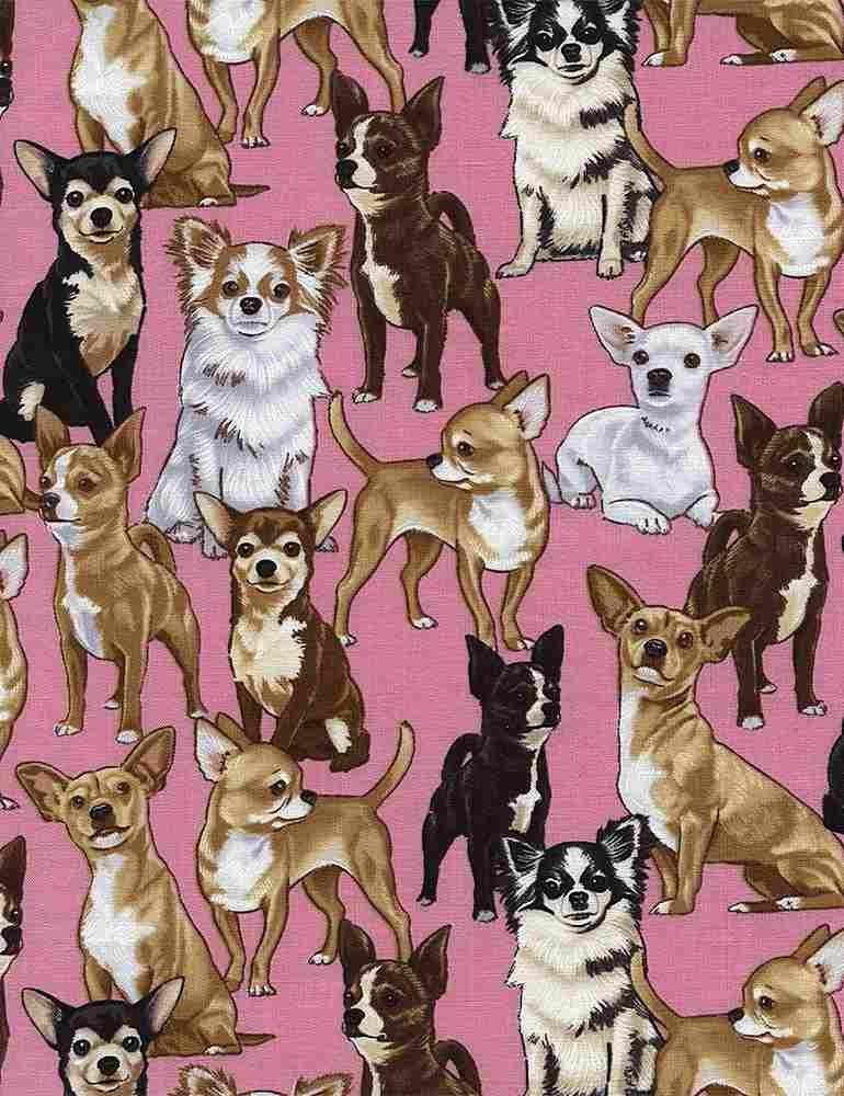 *Chihuahuas (Pink)