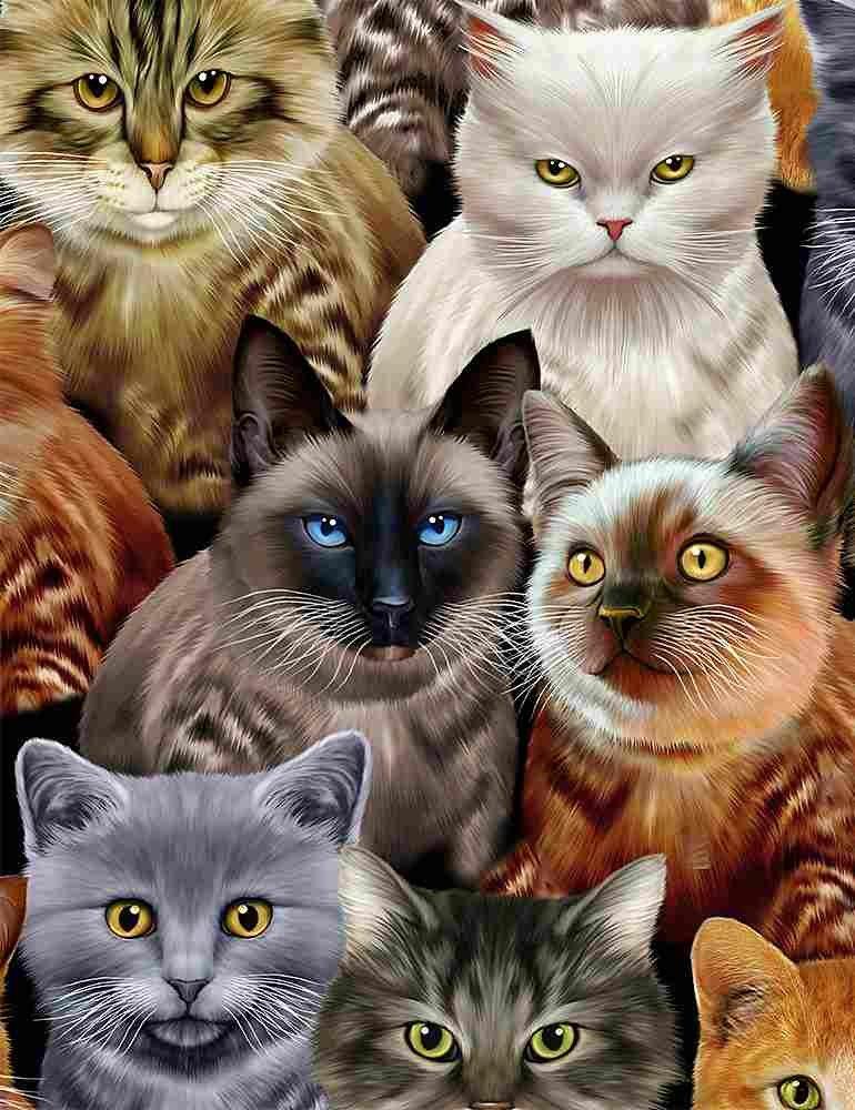 *Cats (Natural)