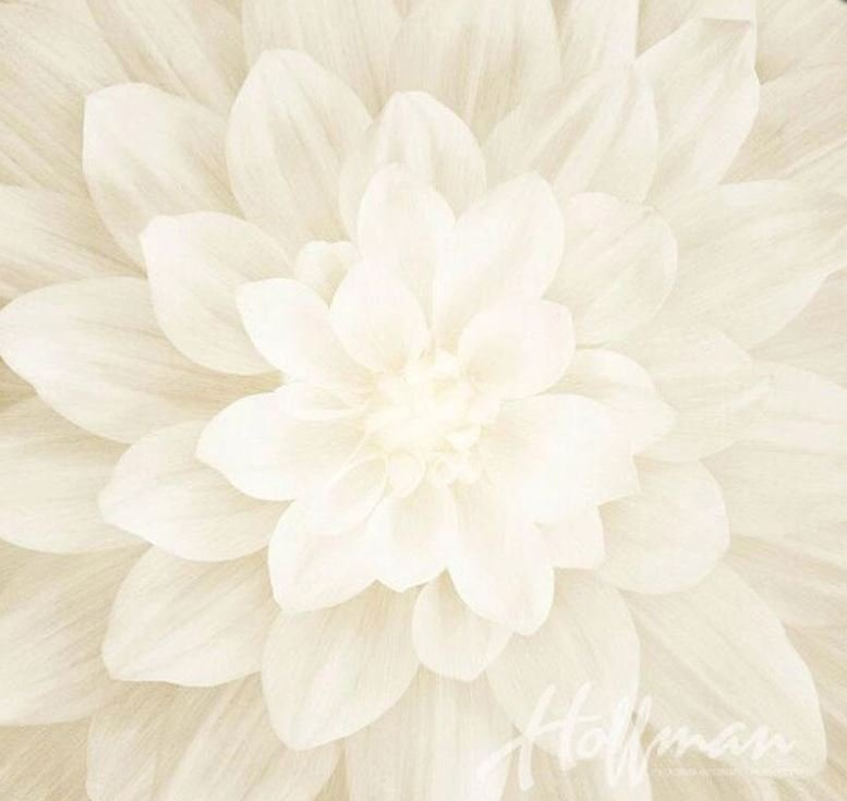 P4389-22 Dream Big White 22 Hoffman