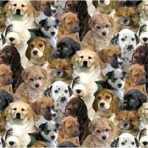 Puppy Dog Faces Antipill Fleece Fabric