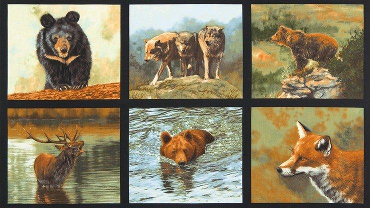 Nature Studies 3 - #ADV-16301-268