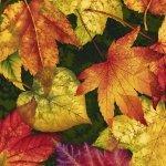 Autumn Album - #2017-68 - By Color Principle