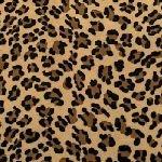 Baby Leopard Cuddle