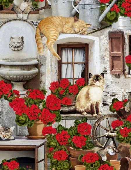Cats And Geraniums