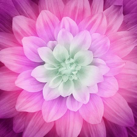 Dream Big-Thistle Large Flower 43x43 Digitally Printed