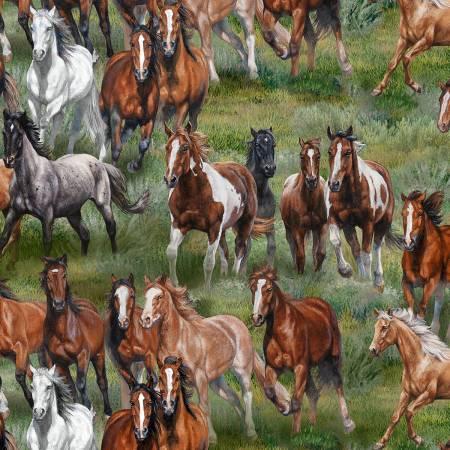 Elizabeth Horses All Around