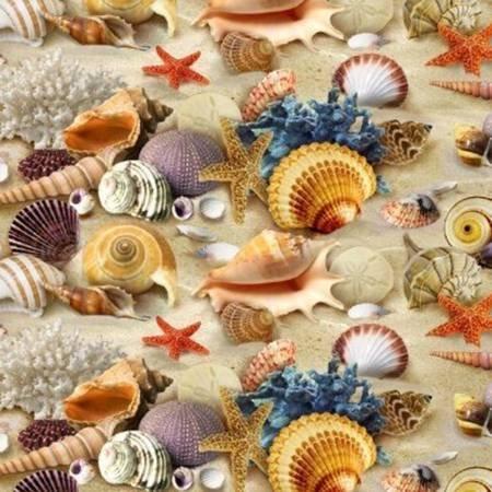 Sand Sea Shells on Sand