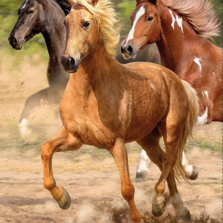 Hold Your Horses-wild horses galloping
