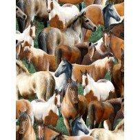 Roaming Wild - wild horses