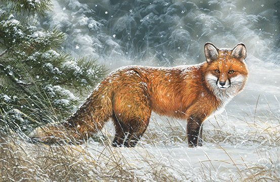 Naturescapes The Sly Fox - fox panel