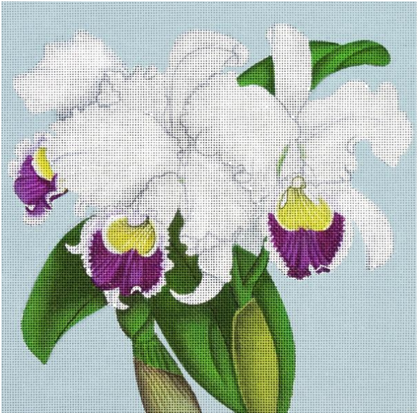 MSD/2214C Purple & White Orchids