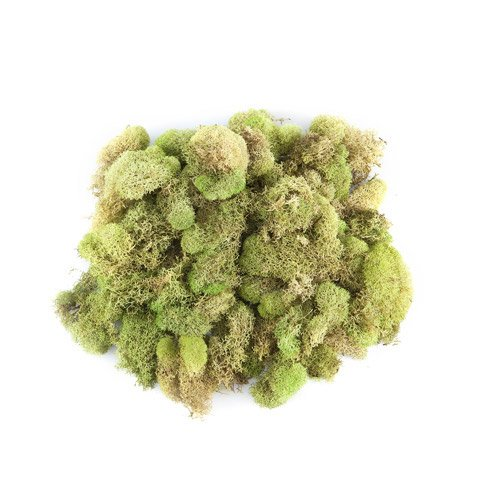 Darice Quality Growers Preserved Reindeer Moss - Spring Green - 108.5 cubic inches