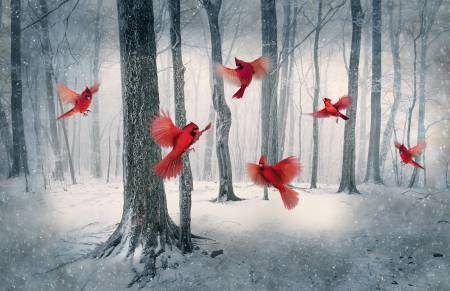 Call of the Wild Digital Collection-Cardinal Digitally Printed Panel 43in x 29in