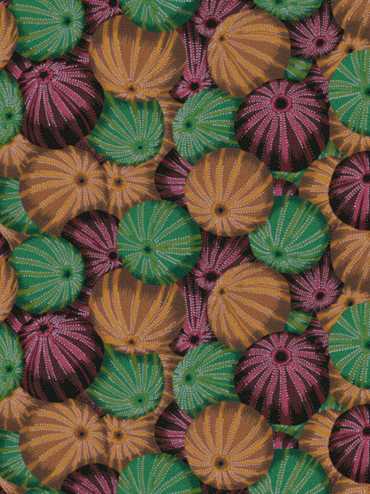 Sea Urchins (G)