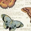 Bookshelf Botanical by Whistler Studios for Windham Fabrics 43385M-1