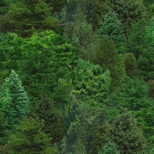 Elizabeth Studio trees/green
