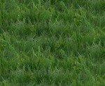 Green grass Landscape Medley 250 Elizabeth studios