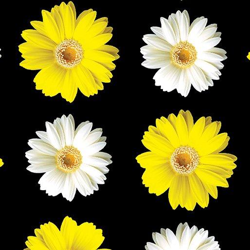 Window Daisy Black