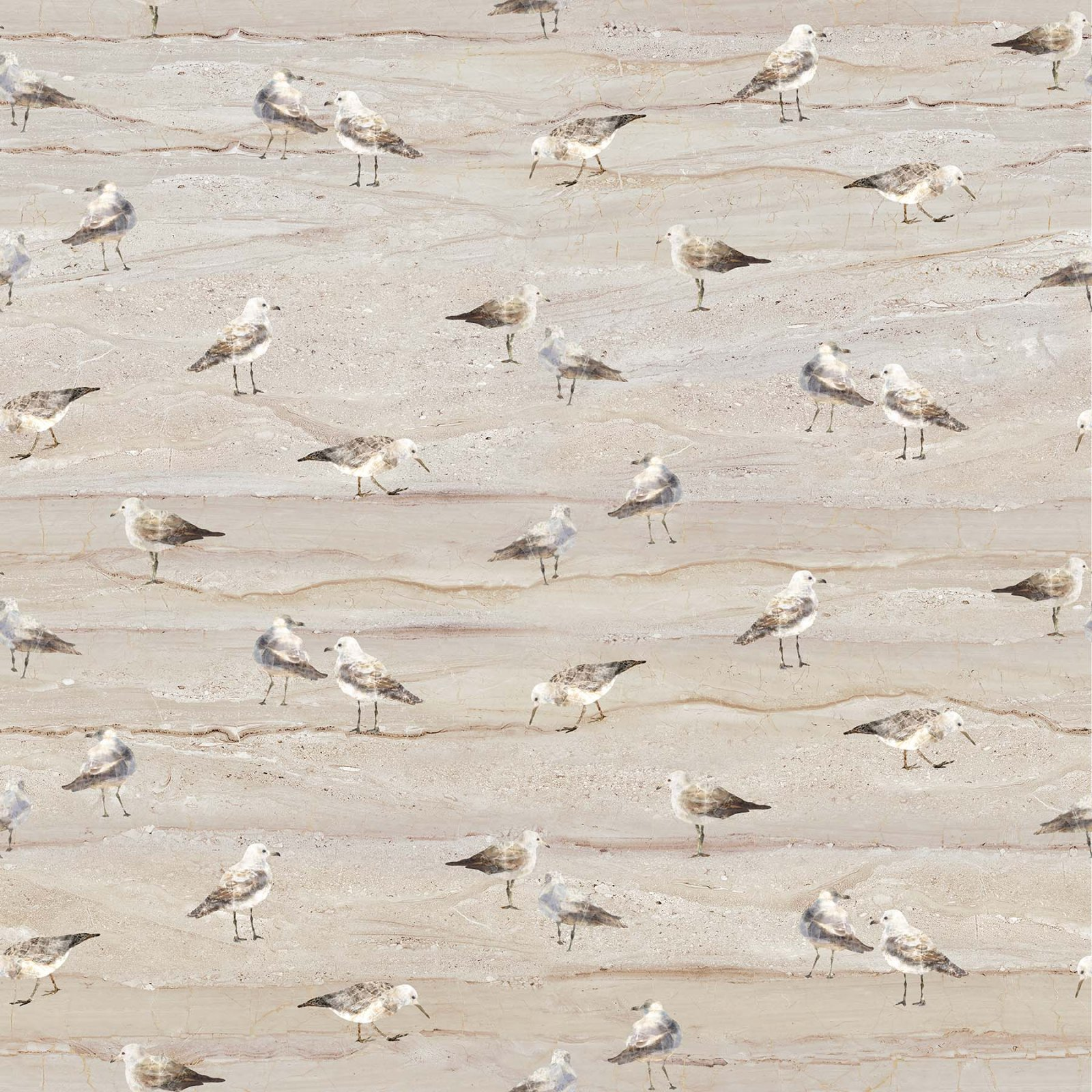 NORTH- Swept Away Neutral Gulls on Sand