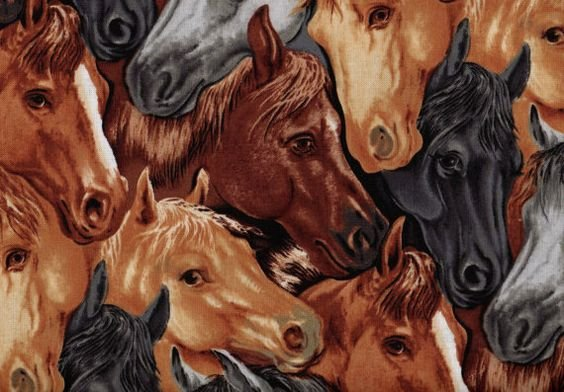 Blank Quilting Round Up II - Horses BTR6329