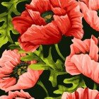 Poppy Poetry Y2658-39 Coral Large Toss